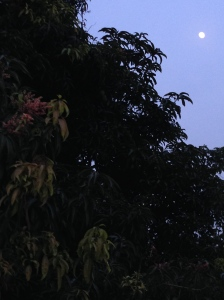 Moon over mango tree, Chennai