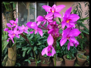 Orchids Amritapuri