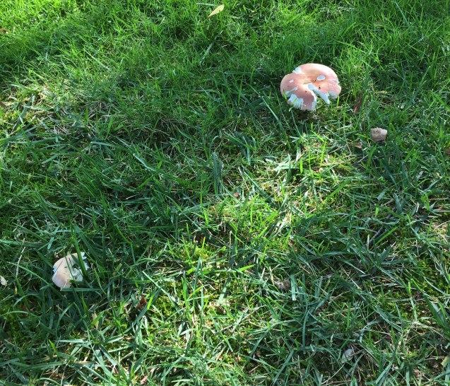 Mushrooms in drought