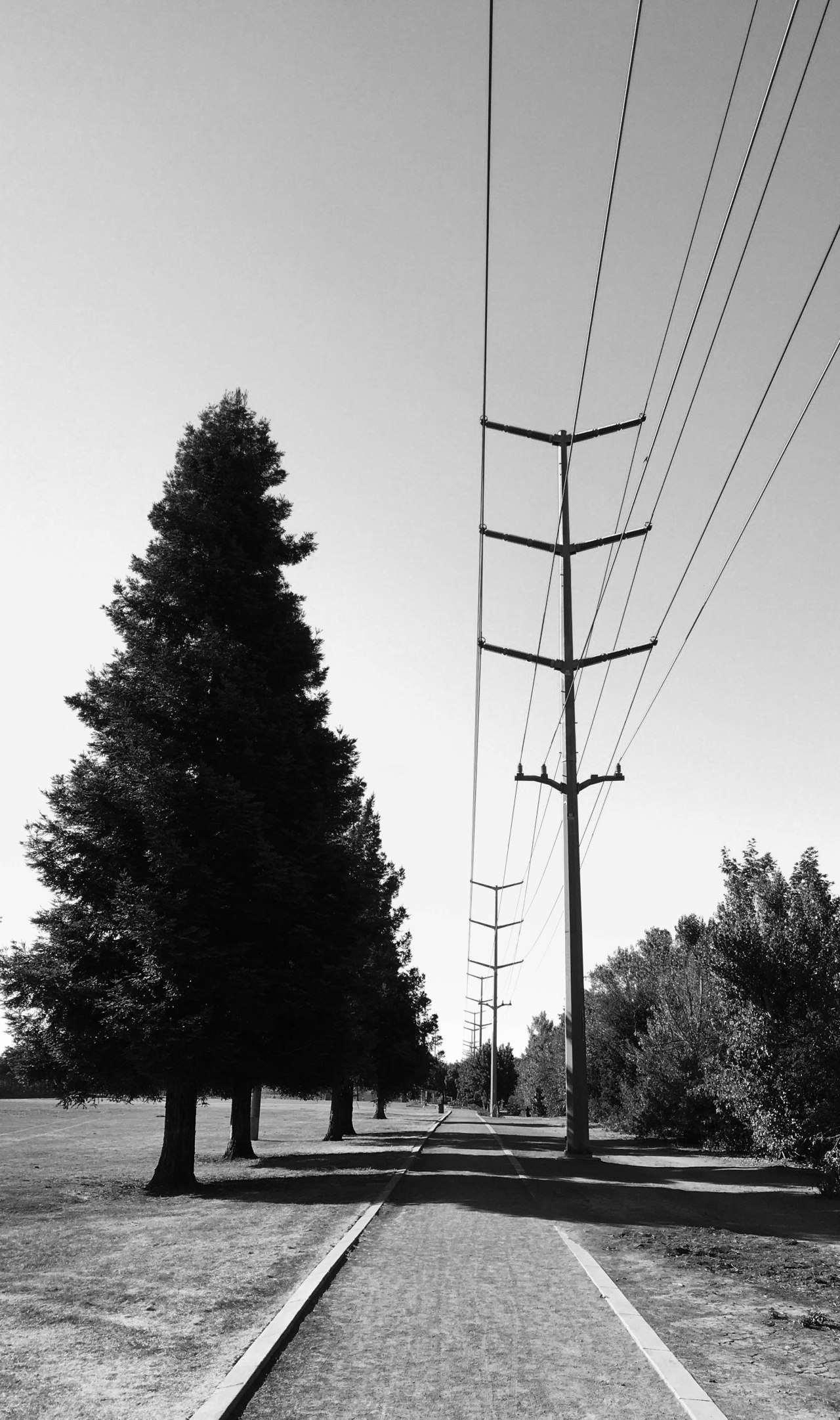 Trees and Ts BW Lr2