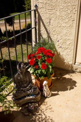 buddha-w_dahlia-lavender