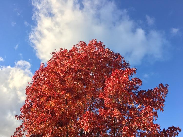 fall-tree-w-cloud