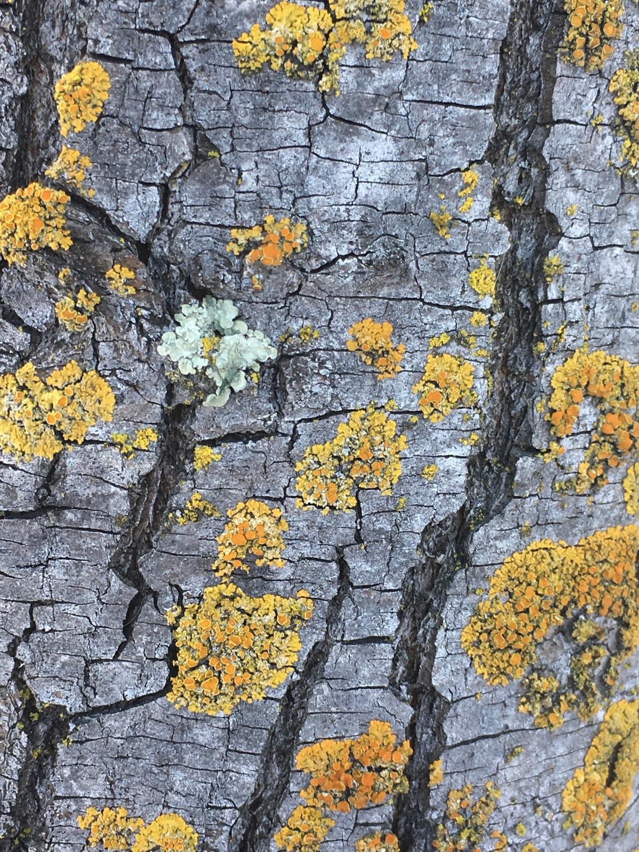 Moss-tree trunk