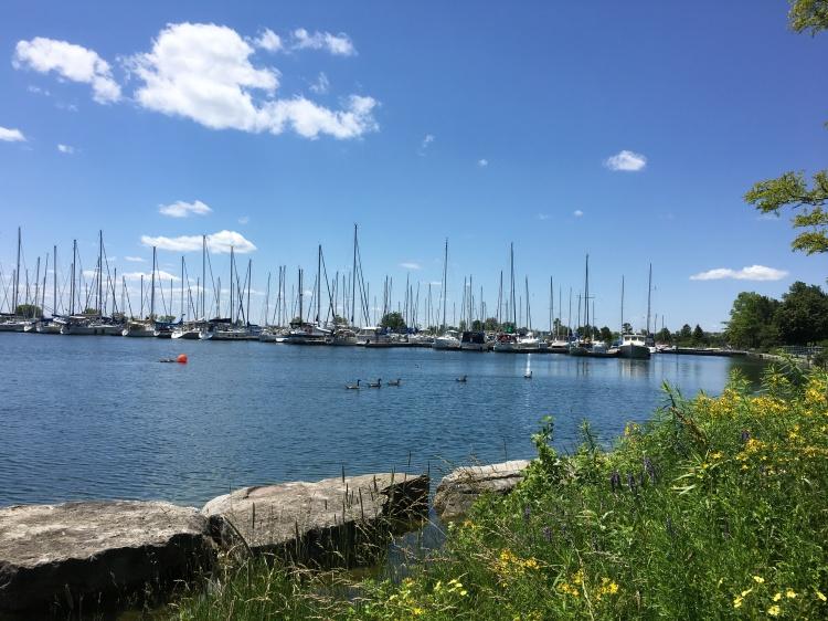 Lake Ontario-Geese-Masts