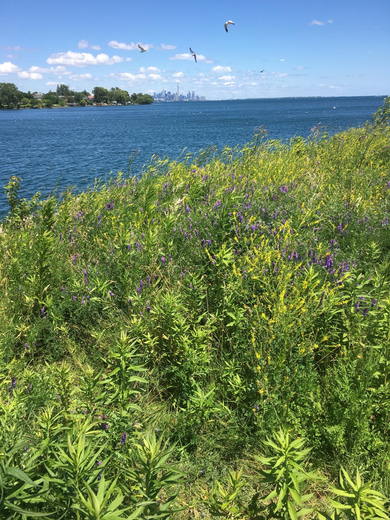 Lake Ontario IMG_3906