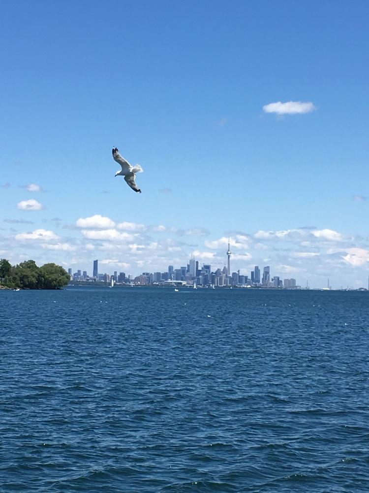 Lake Ontario-Toronto