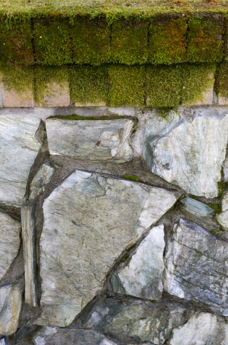 Wall with moss Texture3-1418