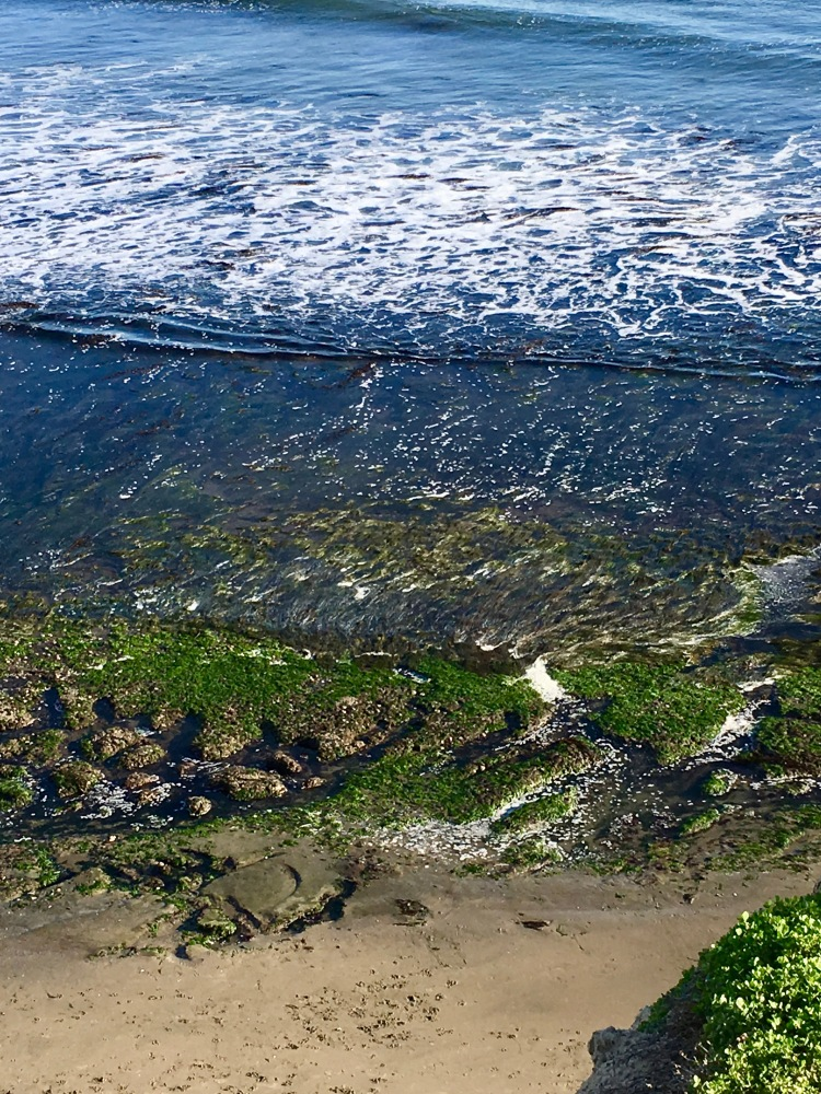 SC East Cliff low tide