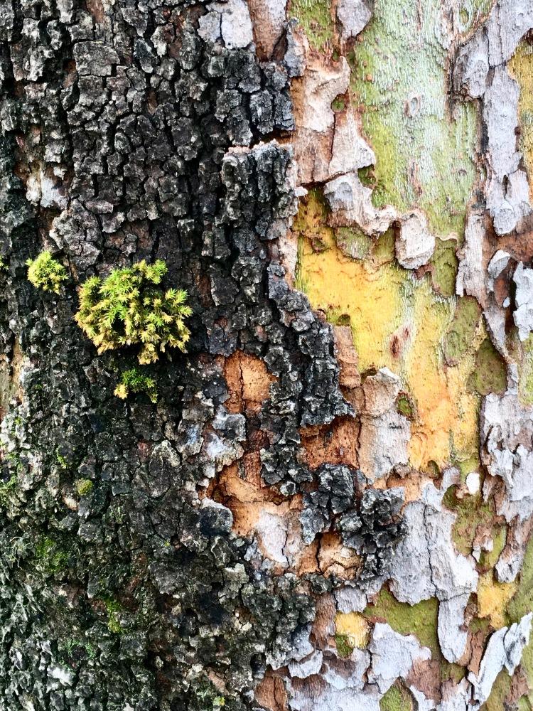 Bark w Moss