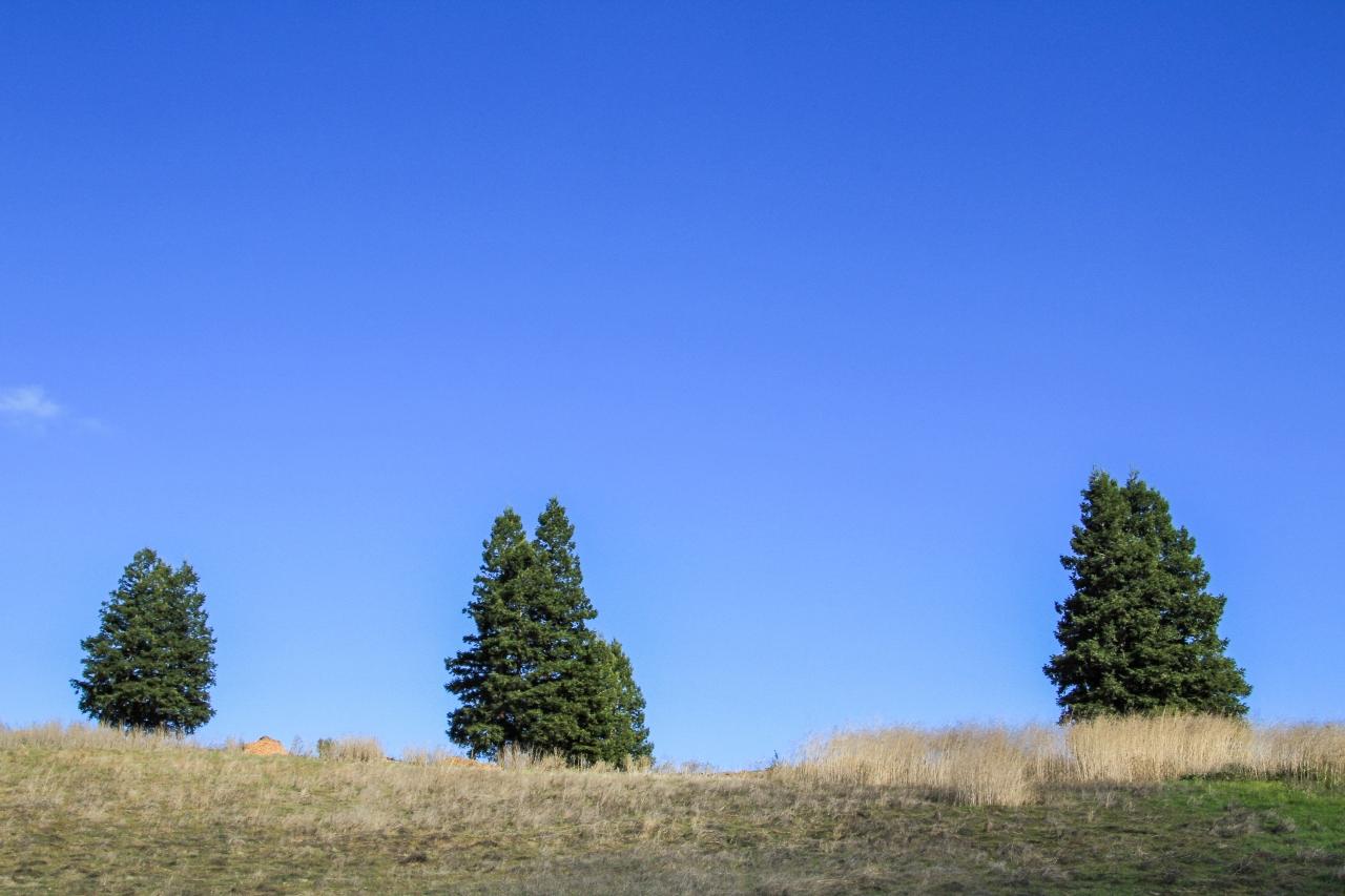 Tree Ghosts 1-3