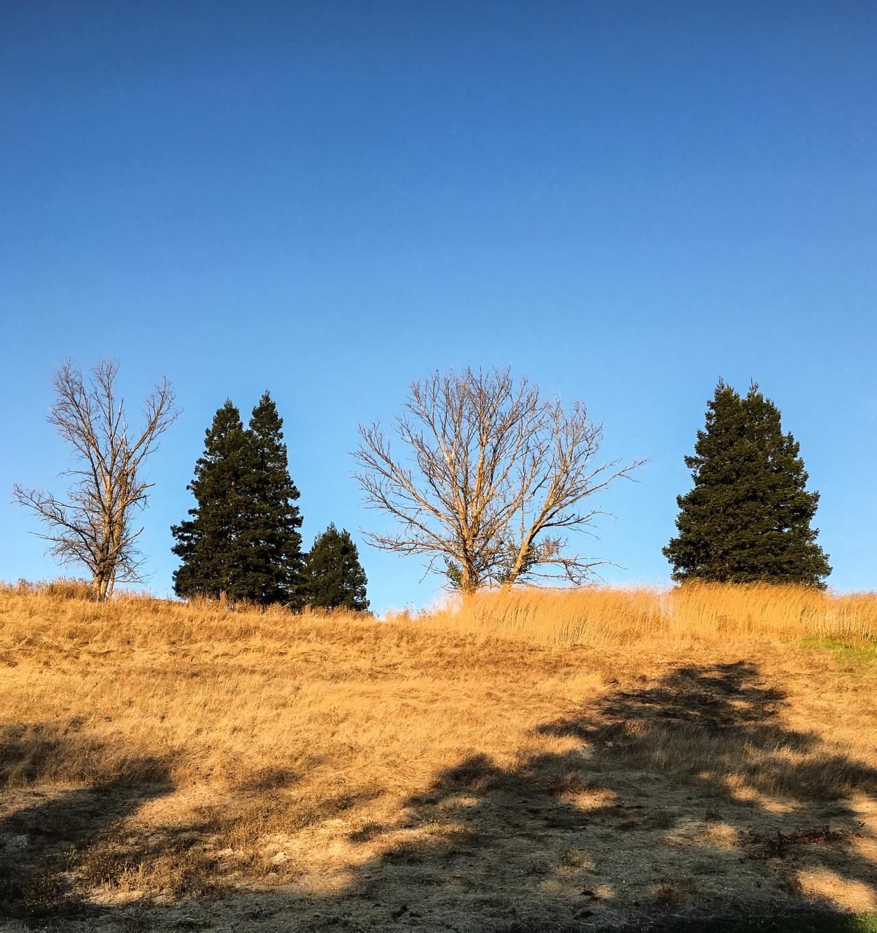 Trees on Ridge-4