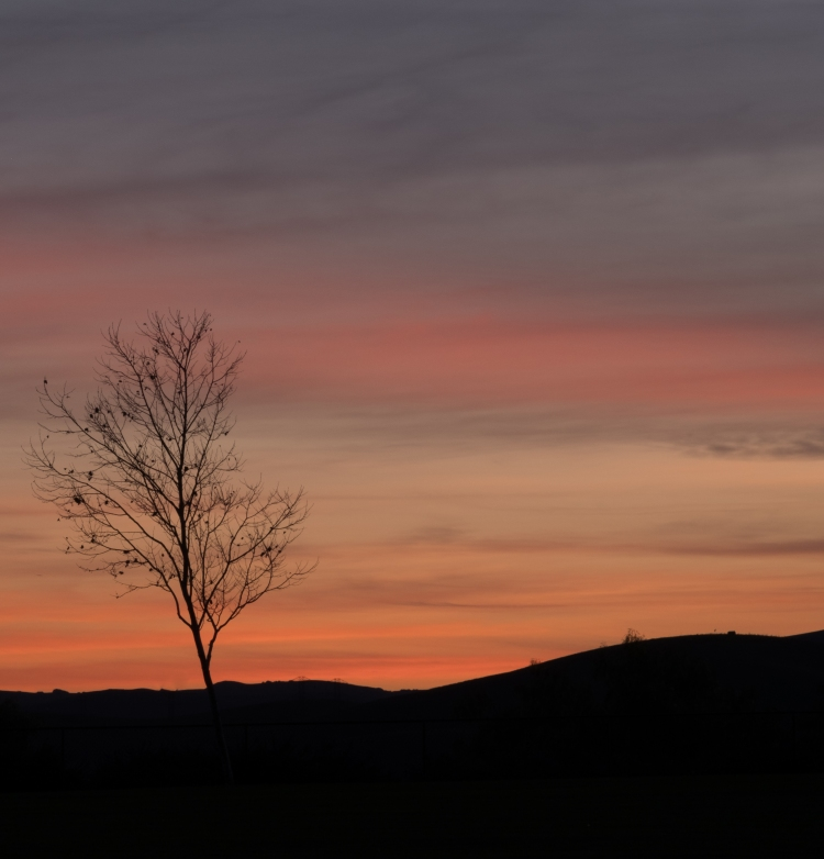 Sunset 1-31-18-0096