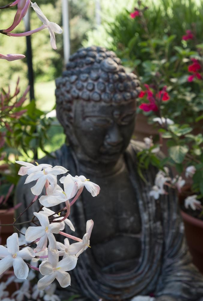 Buddha w Jasmin 2-1005