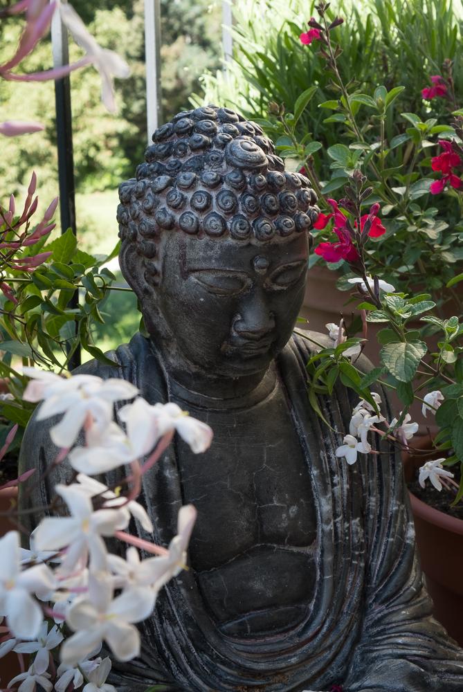 Buddha w Jasmin 2-1006