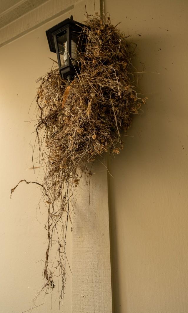 Robins' nest-