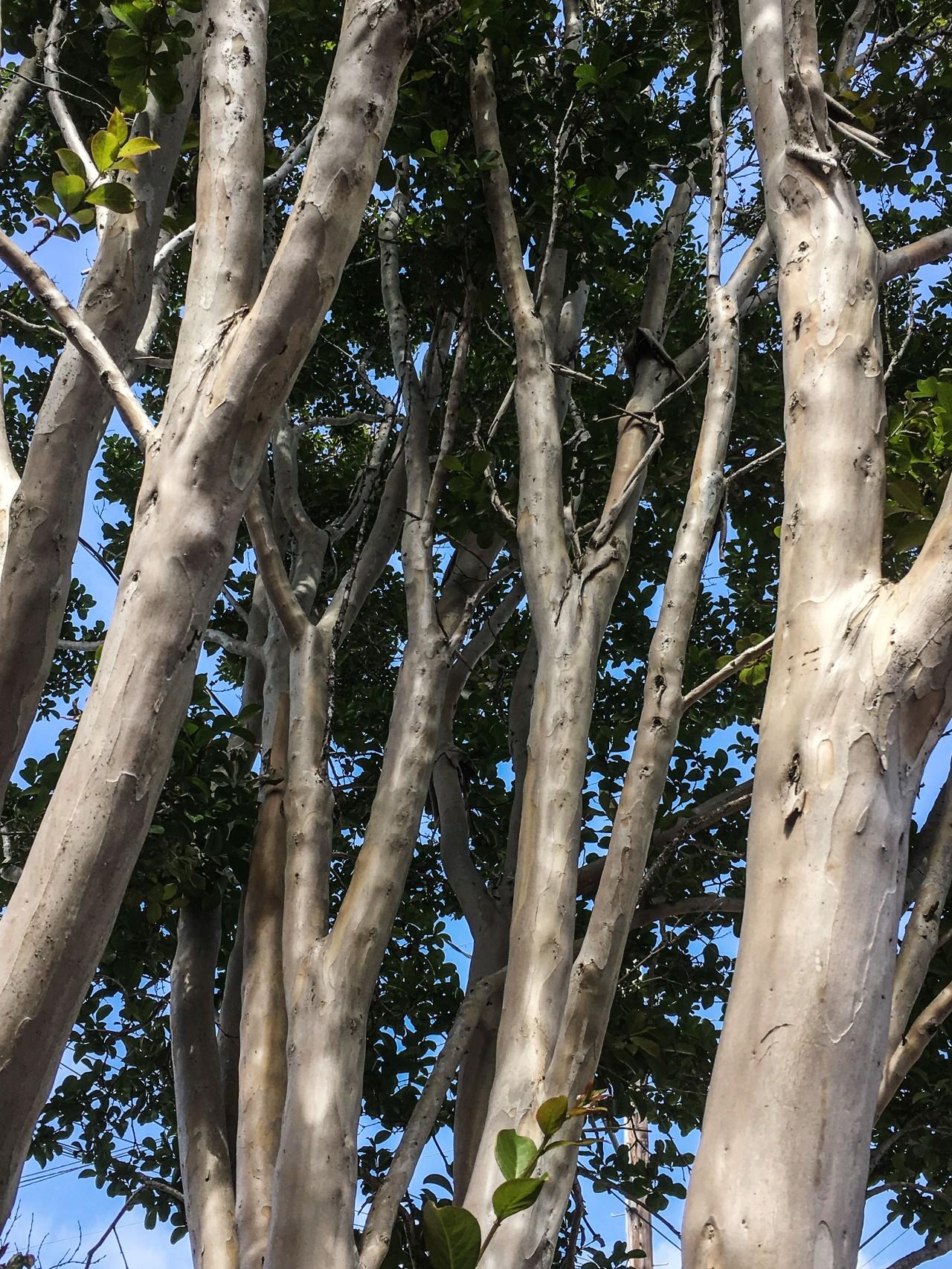 A tree inBerkeley