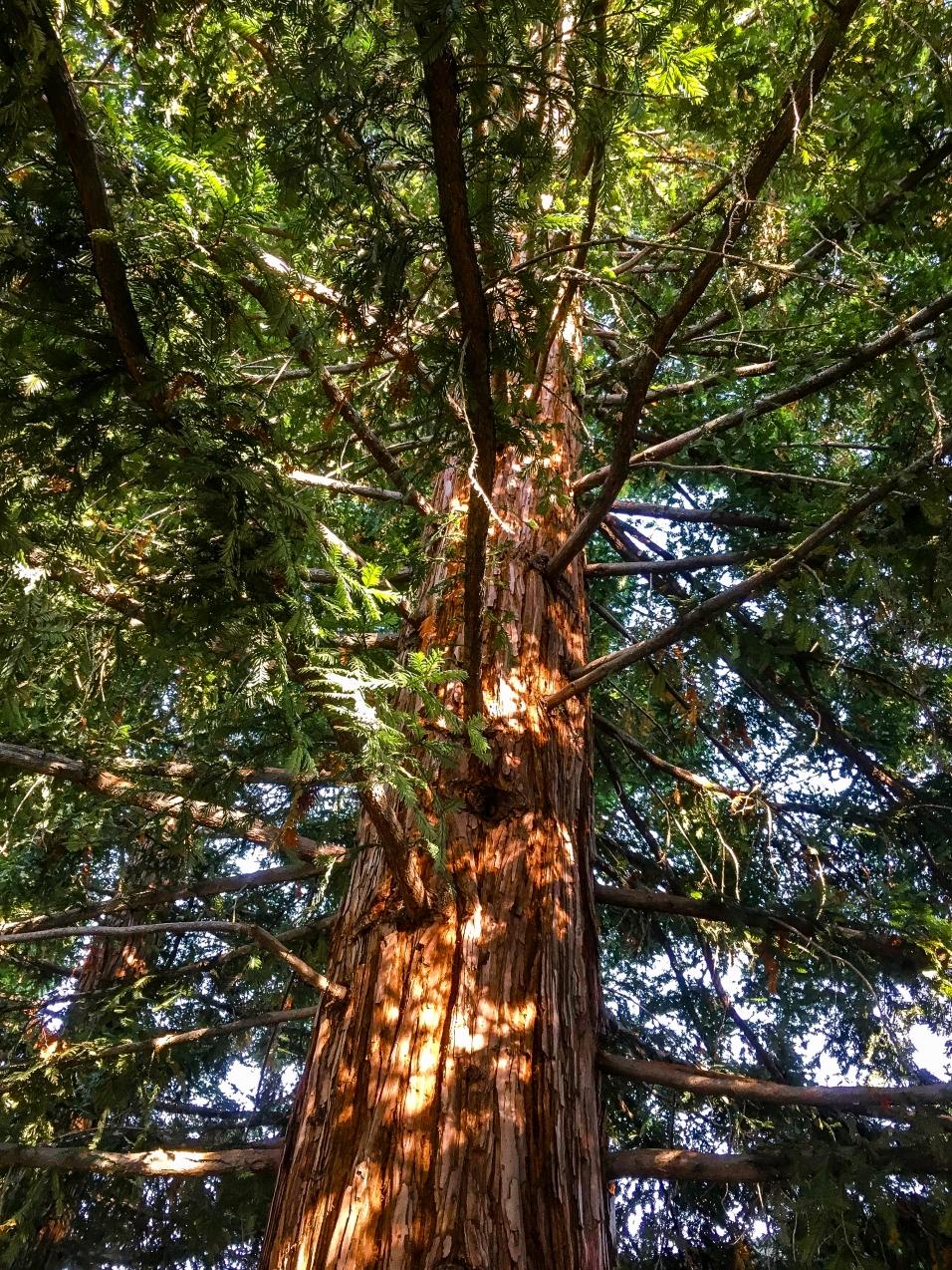 Trees morning light-3
