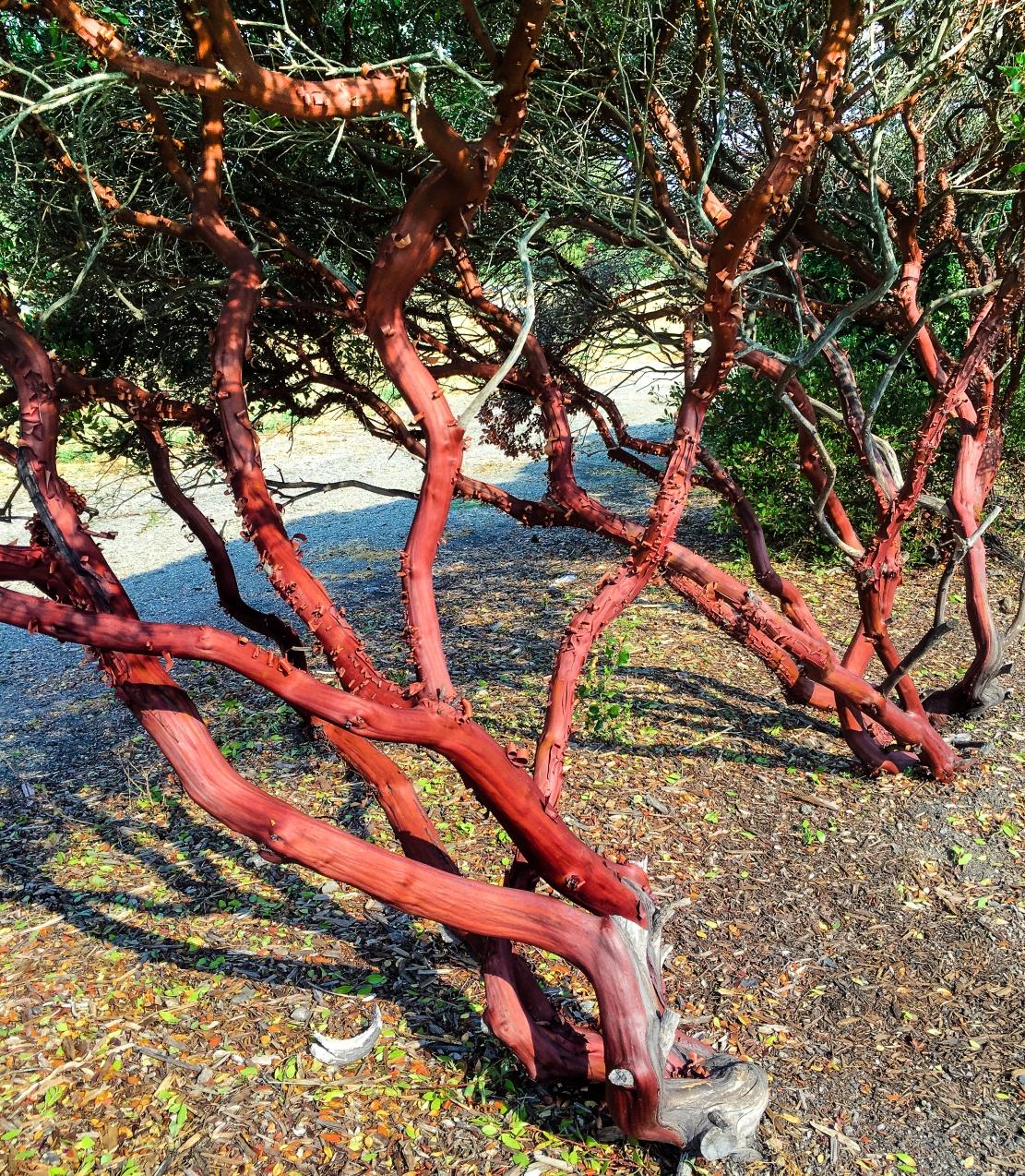 Trees morning light-5108