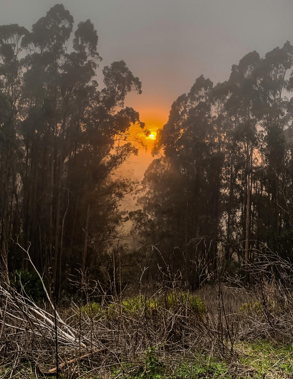 Tilden Park sunset 1a-5804