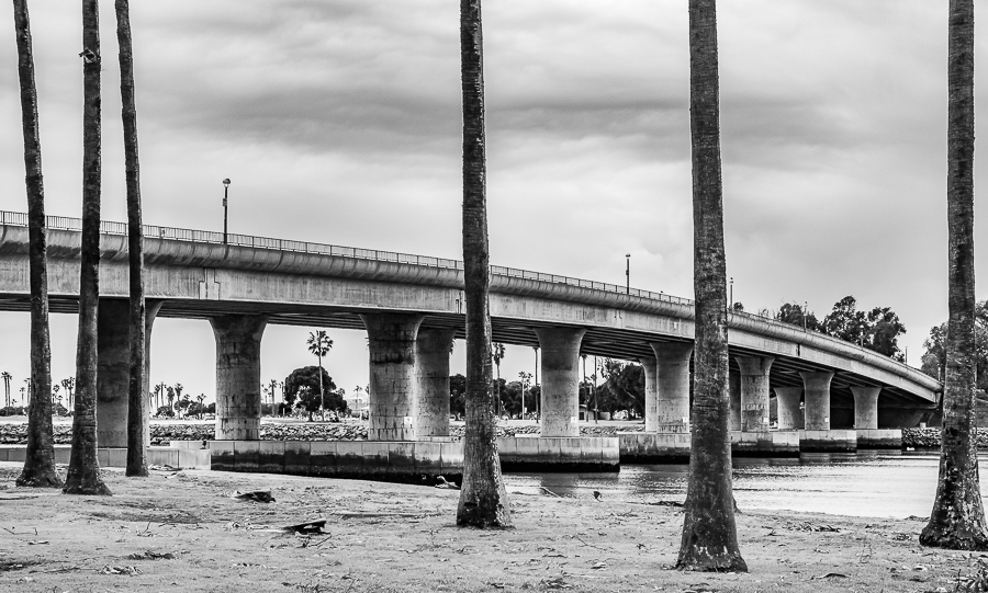 Palm trees and bridges – San Diego, California