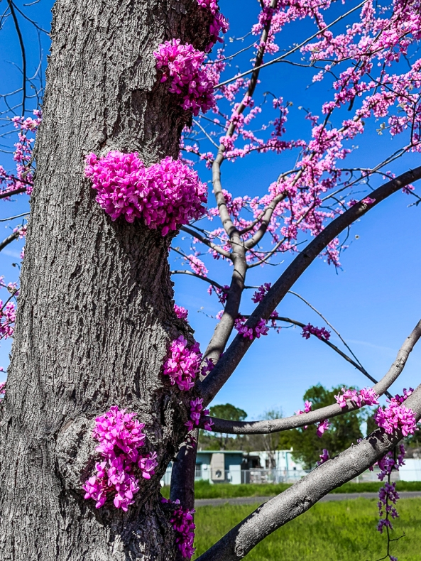 SR Spring Blossoms-2-2