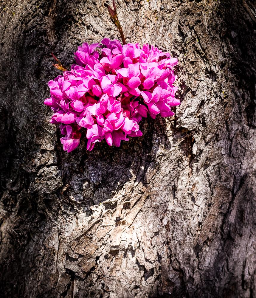 Springtime – San Ramon,California