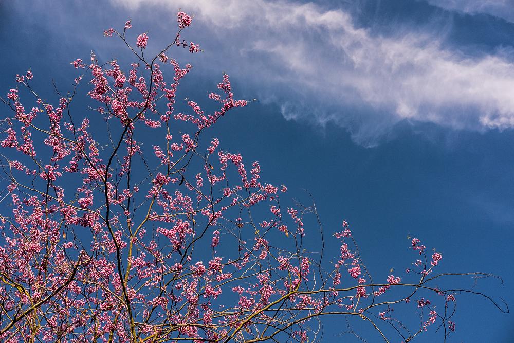 Spring is happening