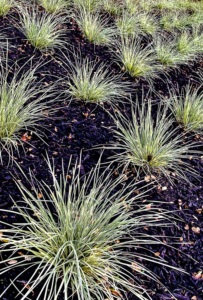 WW- Wispy plants on blue-black-6030