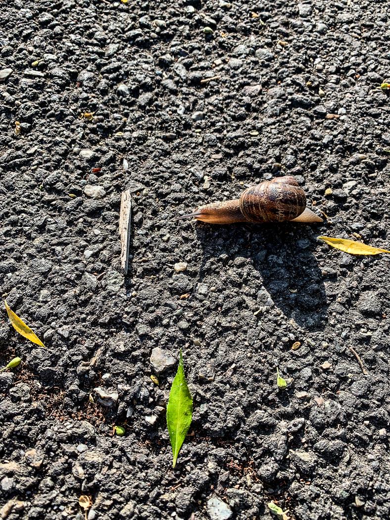 Snail speedbump-6972
