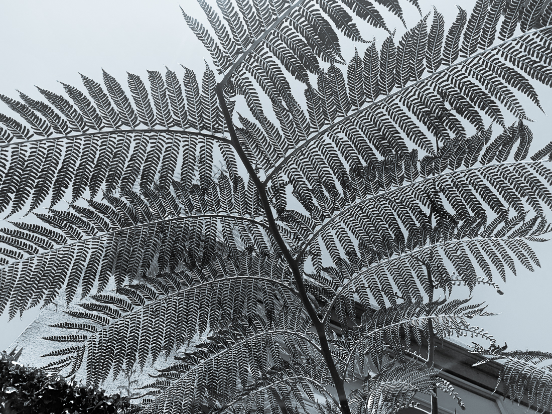 Monochrome Mondays – Fern
