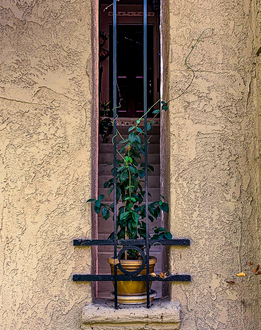 WW-Plant, stairs and door-7450-2
