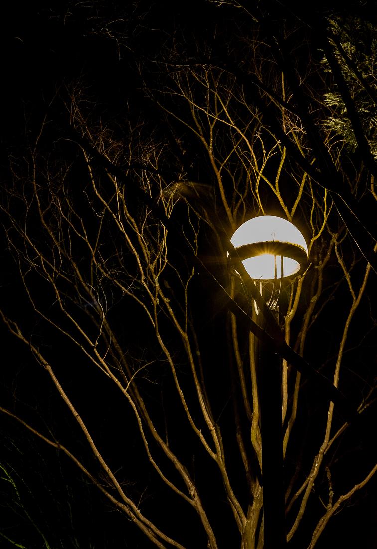 Night Life - Street Lamps-5959