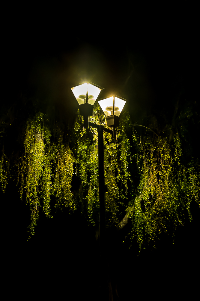 Street lamp, night with cascading green-5799