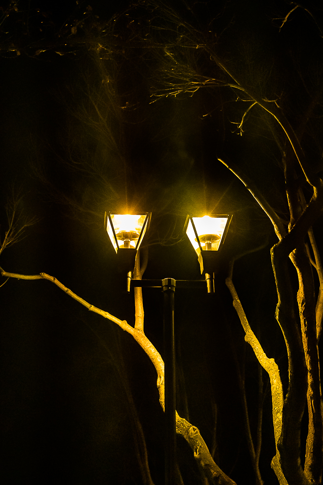 Street lamp-Winter Solstice 2019-5784-2