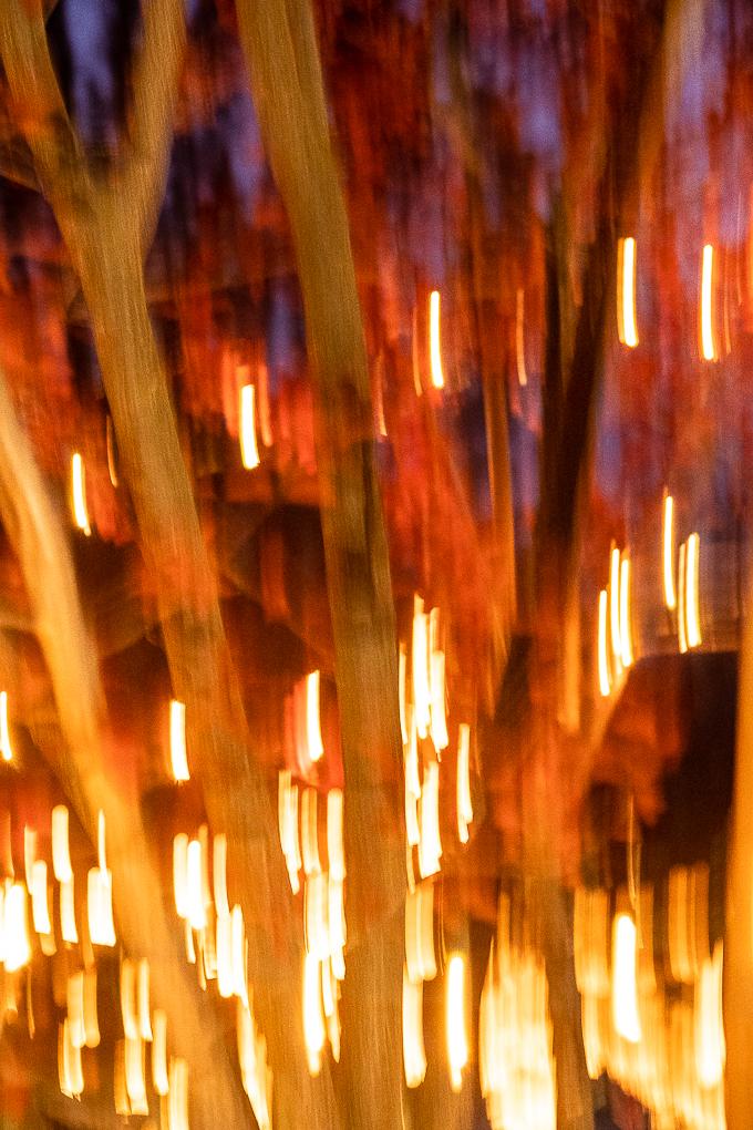 Fire lights-0228