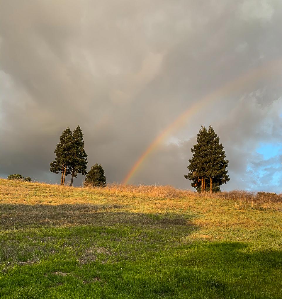 Rainbow COVID 19-8626