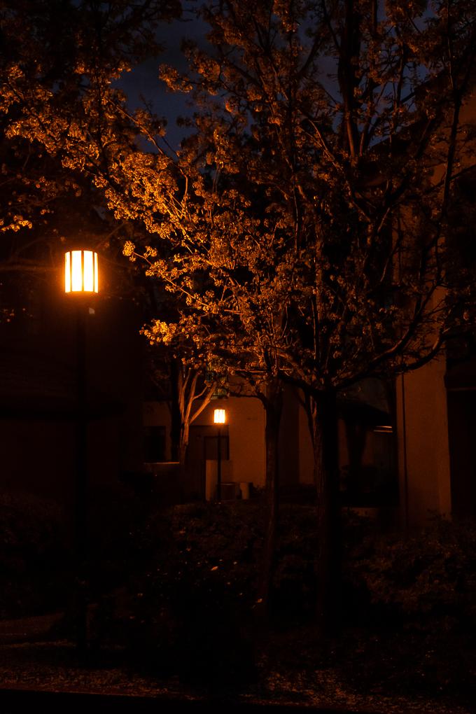 Street lamps 246 CWW-0312