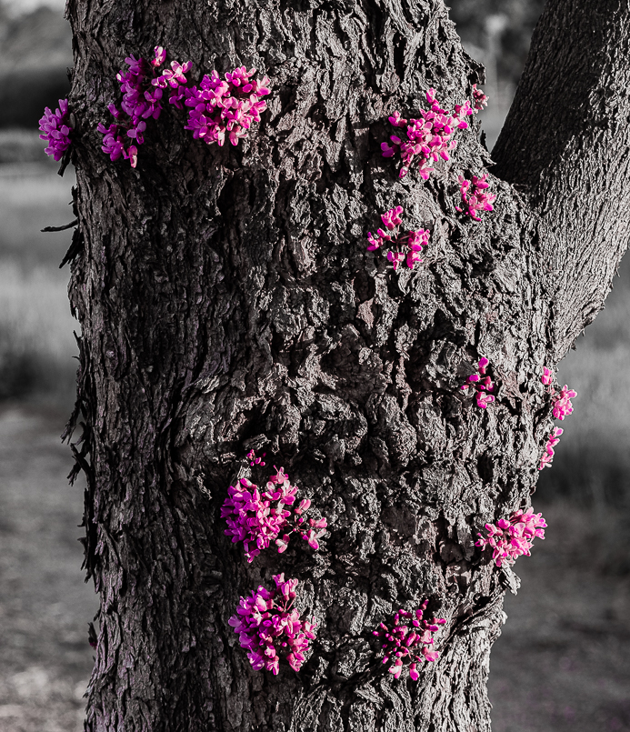 LA - Flowers on tree trunks 2-0063-2
