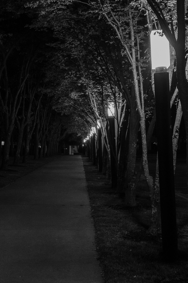 Monochrome Mondays: Lamps lighting a path