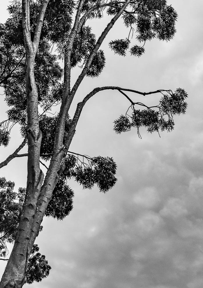 Monochrome Mondays: Reaching