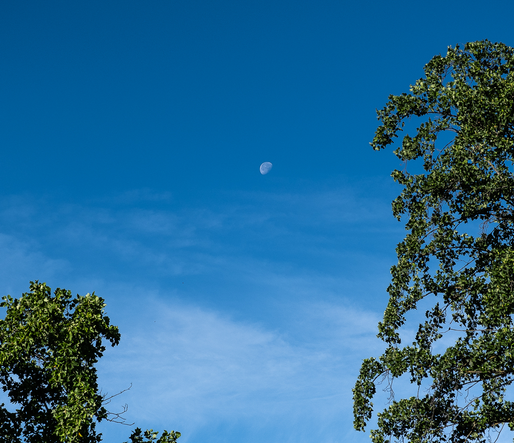 WW-Trees playing with the moon-0275-2