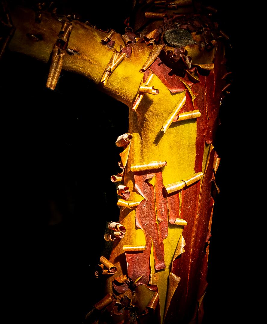 WW-Manzanita bark-close up--2