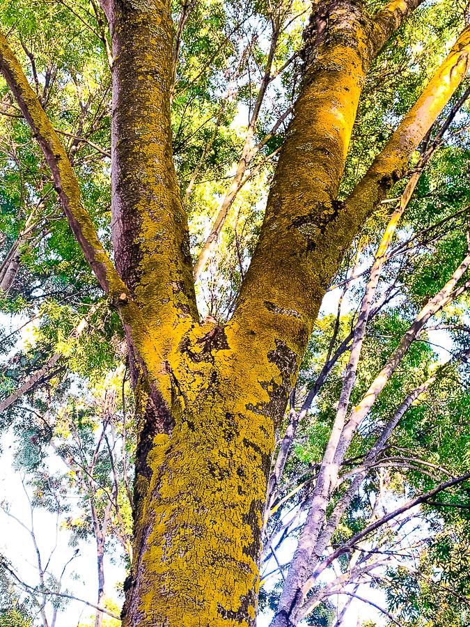 WW-Painted lichen-9593-3