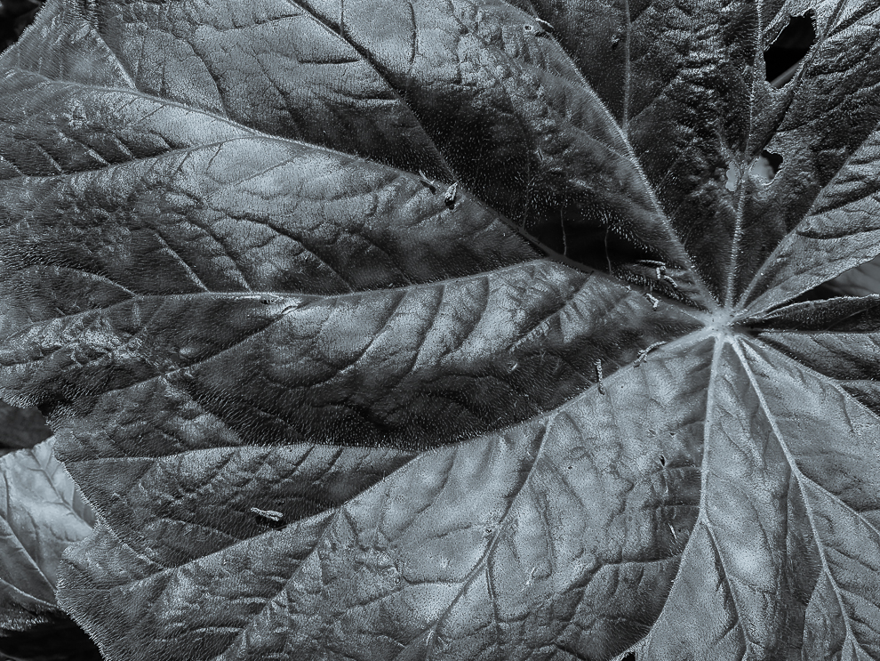 Monochrome Mondays: Leaf