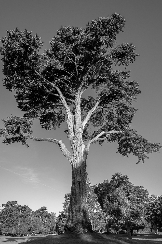 Monochrome Mondays: Trees – the lungs of the Earth