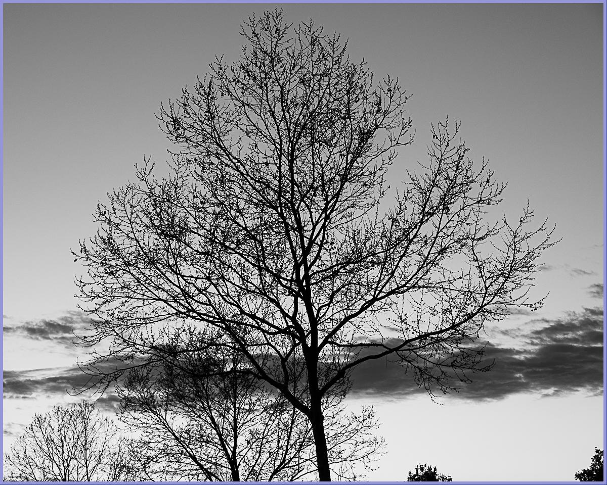Monochrome Mondays: eveningsilhouettes