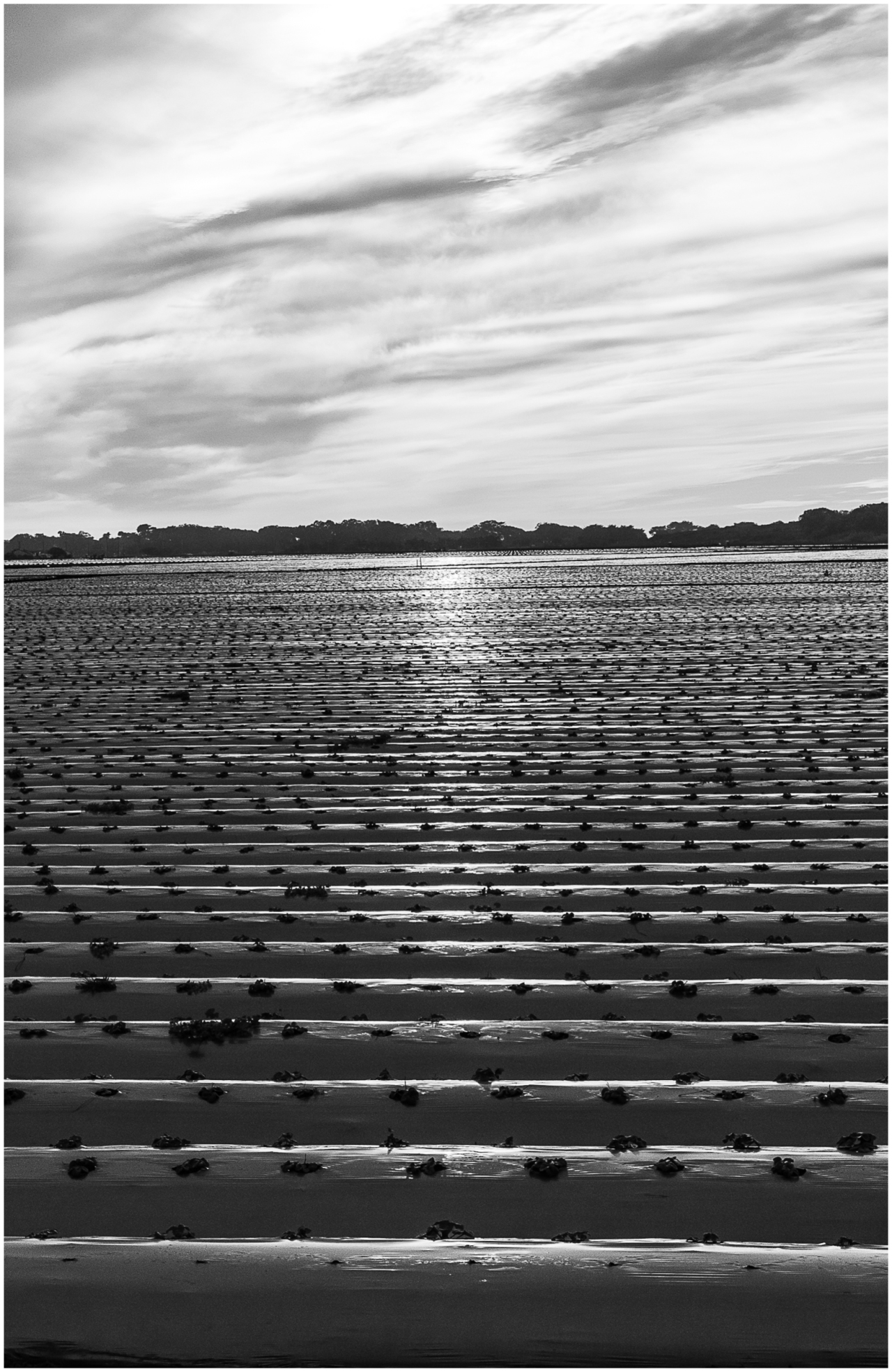 Monochrome Mondays: Field of plastic in the afternoon sun