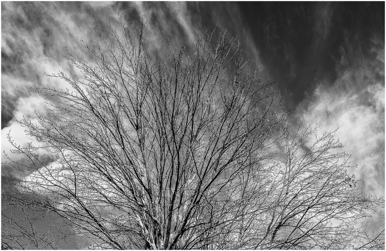 Monochrome Mondays: Bare branches with clouds