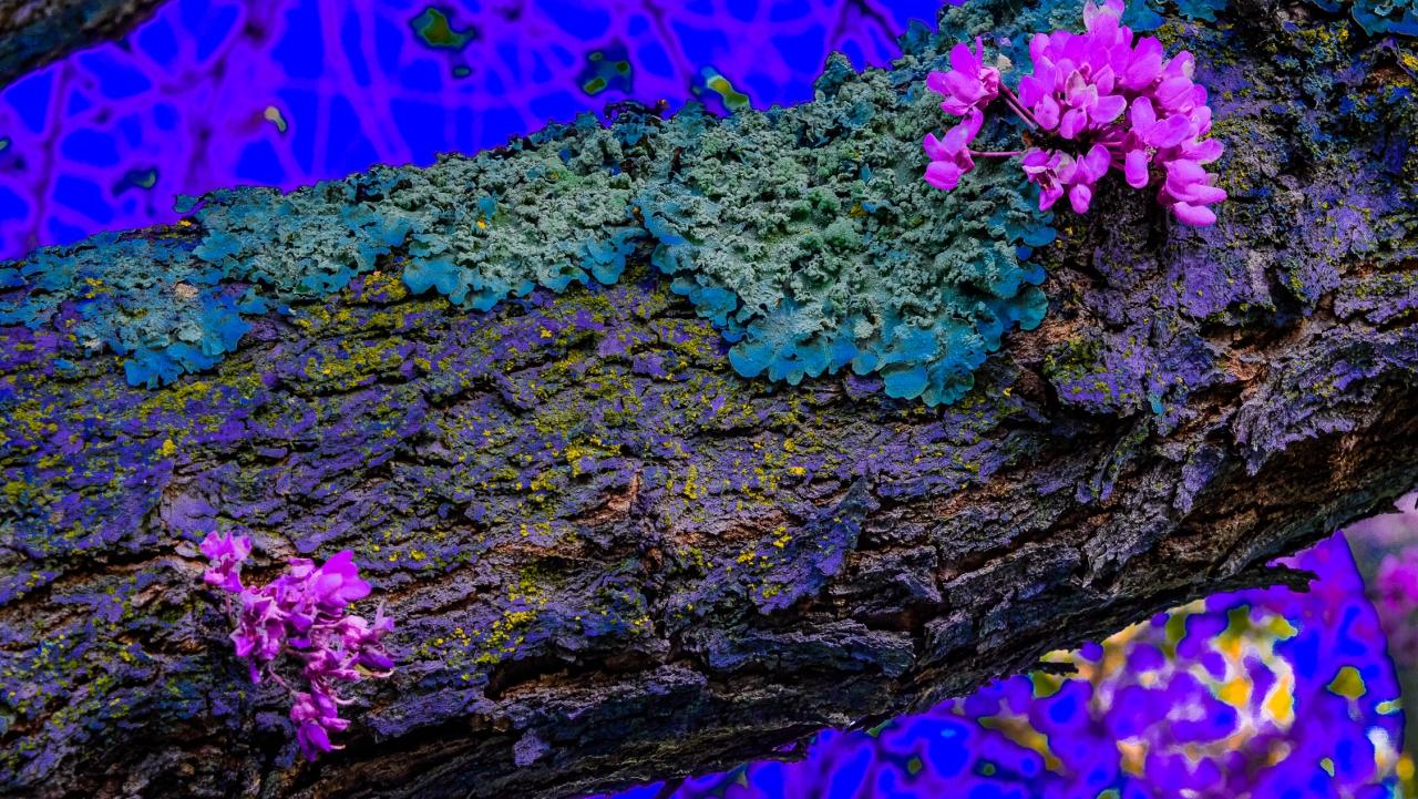 Lens-Artists Photo Challenge – ColorfulApril