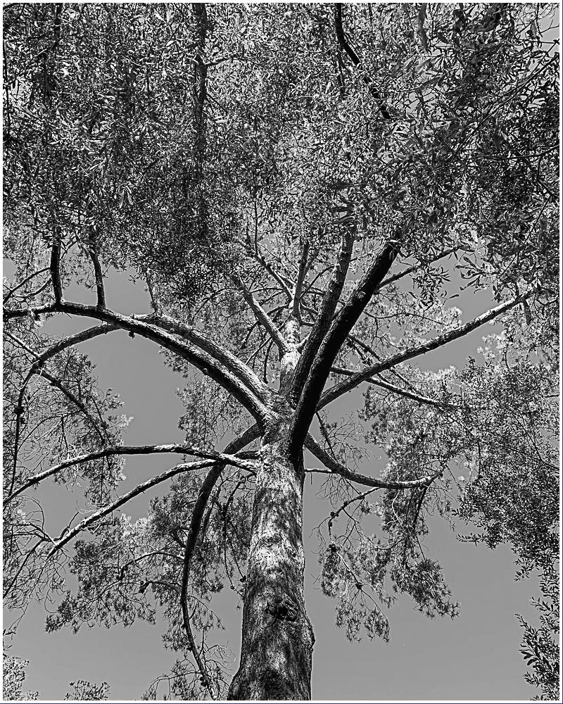 Monochrome Mondays: Octopustree